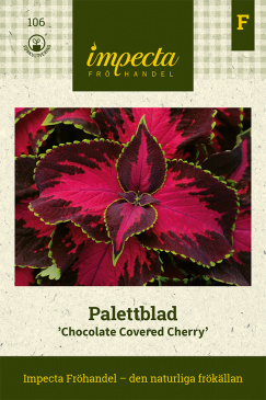 Palettblad 'Chocolate Covered Cherry'