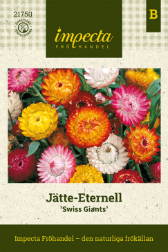 Jätte-Eternell 'Swiss Giants'