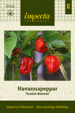 Havannapeppar 'Scotch Bonnet'