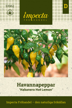 Havannapeppar 'Habanero Hot Lemon'