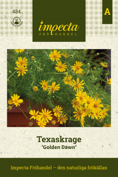 Texaskrage 'Golden Dawn'