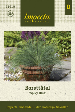 Borsttåtel 'Spiky Blue'