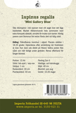 Regnbågslupin 'Mini Gallery Blue'