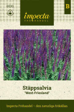 Stäppsalvia 'West-Friesland'