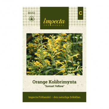 Orange Kolibrimynta 'Sunset Yellow'