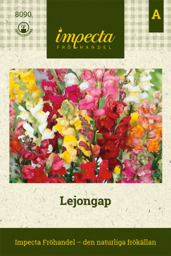 Lejongap 'Colossal Tip Top'