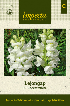 Lejongap F1 'Rocket White'