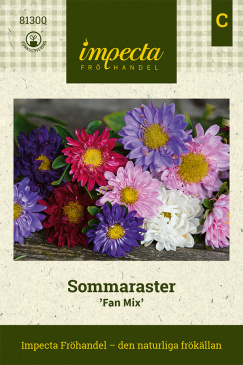 Sommaraster 'Fan Mix'