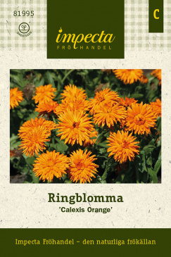 Ringblomma 'Calexis Orange'