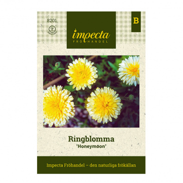 Ringblomma 'Honeymoon'