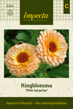 RINGBLOMMA 'Pink Surprise'