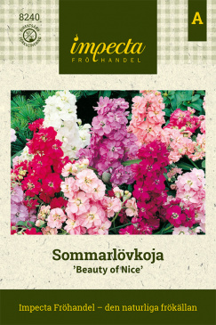 Sommarlövkoja 'Beauty Of Nice'