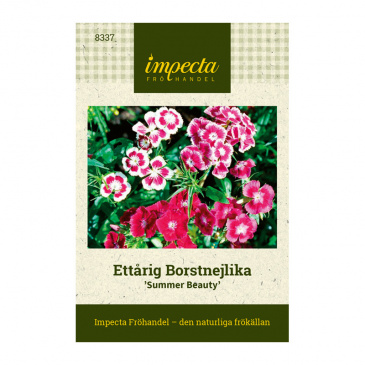 Ettårig Borstnejlika 'Summer Beauty'