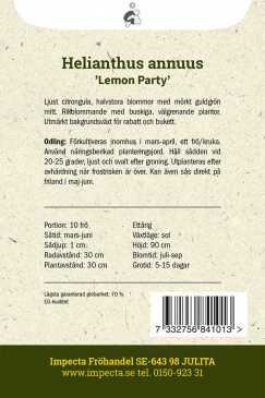 Solros 'Lemon Party'