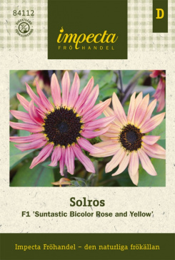SOLROS F1 'Suntastic Bicolor Rose and Yellow'