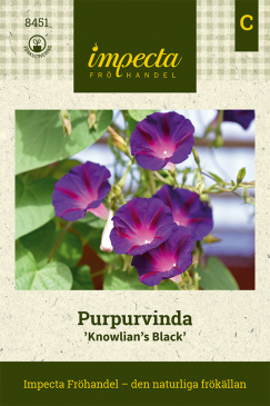 Purpurvinda 'Knowlian's Black'