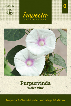 Purpurvinda 'Dolce Vita'