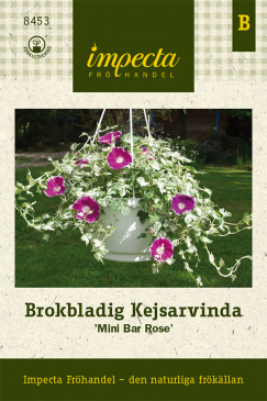Brokbladig Kejsarvinda 'Mini Bar Rose'