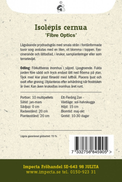 Ampelsäv 'Fibre Optics'