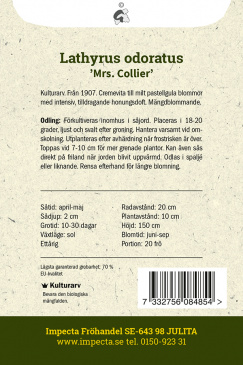 Luktärt 'Mrs. Collier'