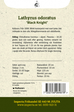 Luktärt 'Black Knight'