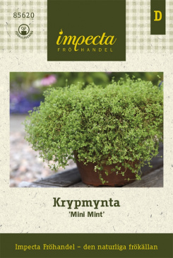 Krypmynta 'Mini Mint'