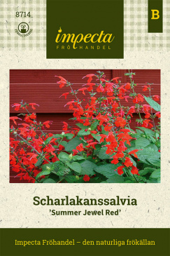 Scharlakanssalvia 'Summer Jewel Red'