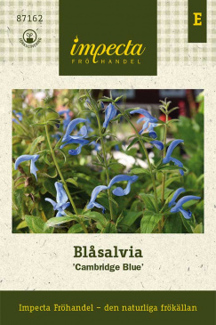 Blåsalvia 'Cambridge Blue'