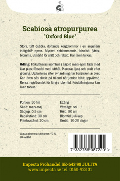 Praktvädd 'Oxford Blue'