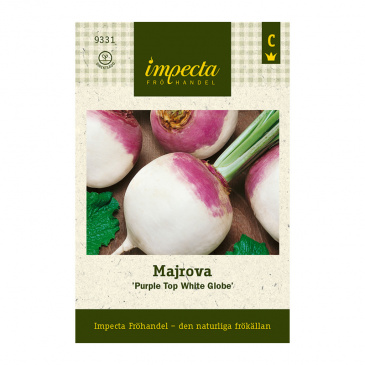 Majrova 'Purple Top White Globe'