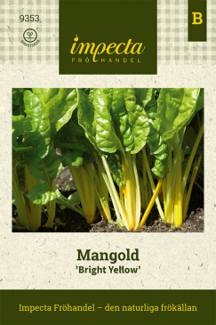 Mangold 'Bright Yellow'
