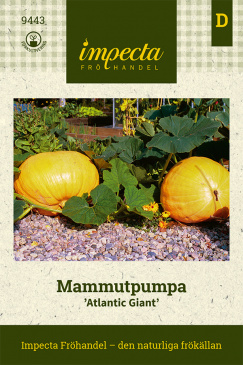 Mammutpumpa 'Atlantic Giant'
