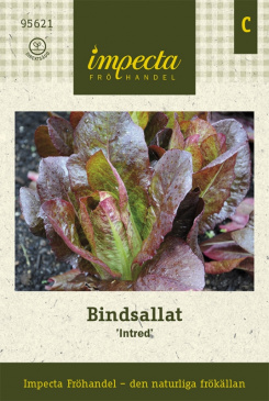 Bindsallat 'Intred'