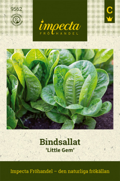 Bindsallat 'Little Gem'
