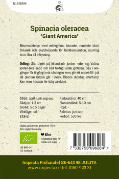 Spenat 'Giant America'