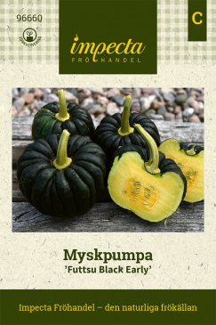 Myskpumpa 'Futtsu Black Early'