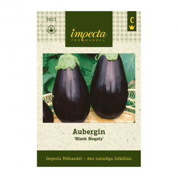 Aubergin 'Black Beauty'