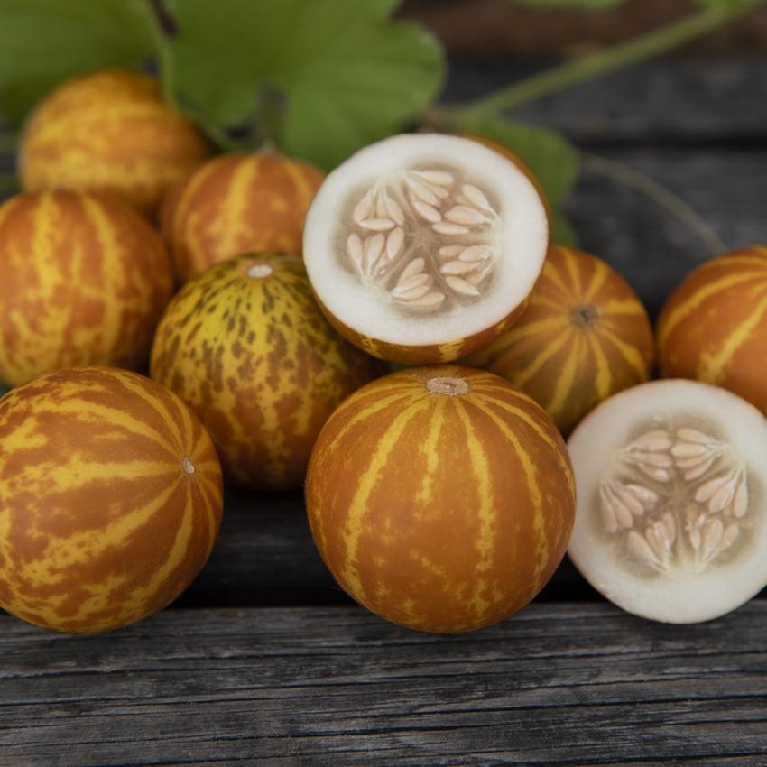 MANGOMELON 'Queen Anne's Pocket Melon' i gruppen Grönsaksväxter / Fruktgrönsaker / Melon hos Impecta Fröhandel (9368)