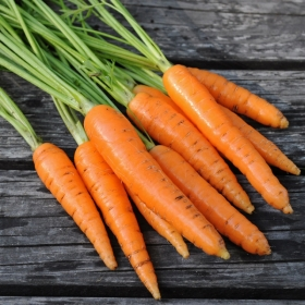 SOMMARMOROT 'Fine' i gruppen Grönsaksväxter / Rotfrukter / Morot hos Impecta Fröhandel (93751)