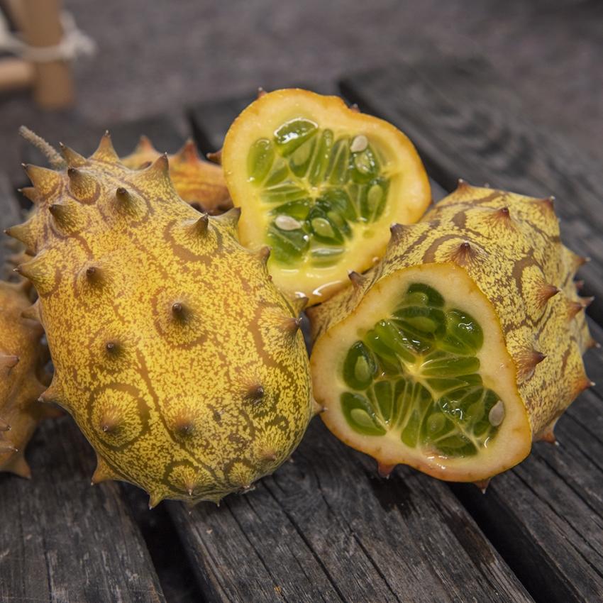 Kiwano i gruppen Fröer / Grönsaksväxter / Fruktgrönsaker / Övriga fruktgrönsaker hos Impecta Fröhandel (9804)