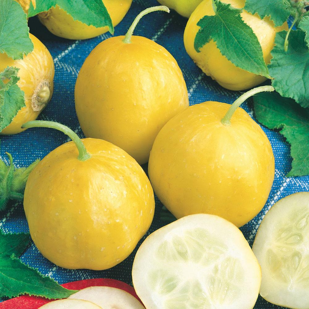 ÄPPELGURKA 'Lemon' i gruppen Grönsaksväxter / Fruktgrönsaker / Övriga fruktgrönsaker hos Impecta Fröhandel (9808)