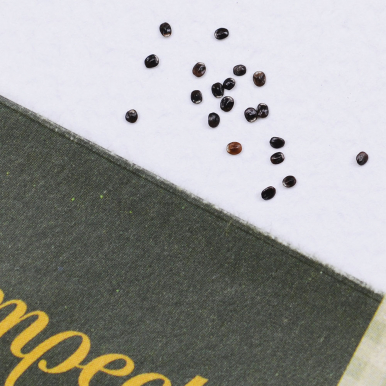 Axnepeta 'Pink Cat'