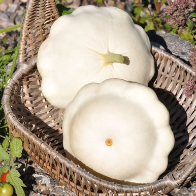 Musselsquash 'Scallopini'