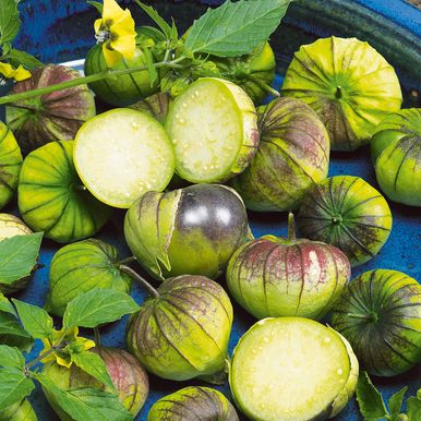 Tomatillo 'Purple'