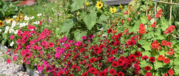 Fröer till ettåriga blomsterväxter