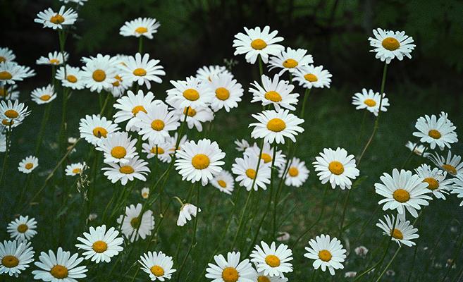fina blommor namn