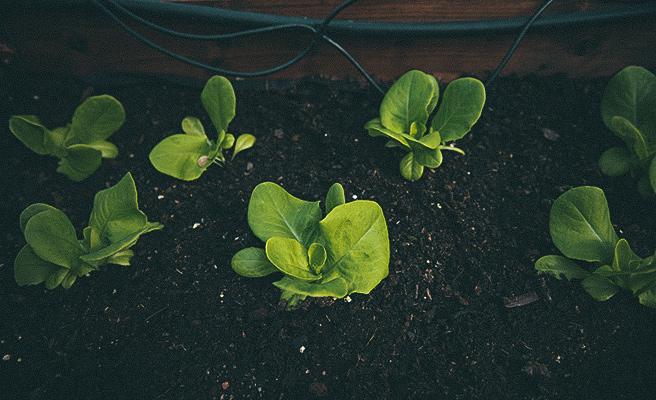 Dyrk alt fra urter, grønnsaker og bær i pallekarmer.