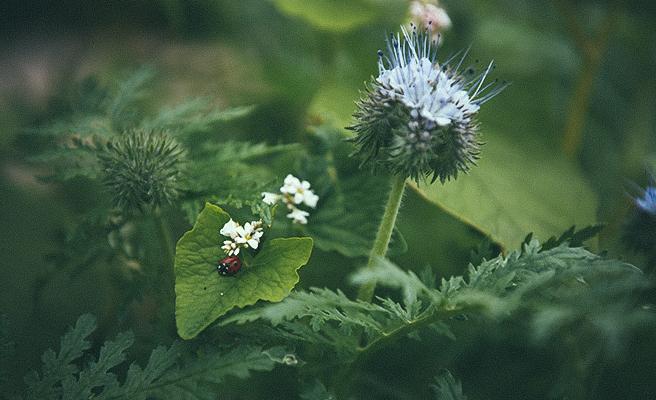 Planter med insekter
