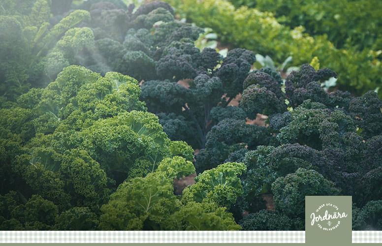 Gödsla grönt