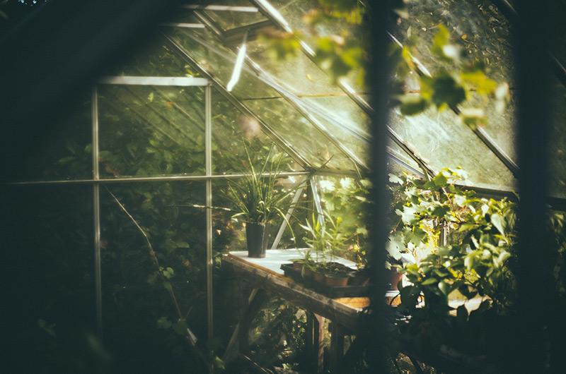 Städa växthuset